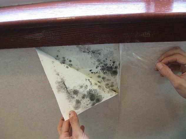 wallpaper-mold.jpg